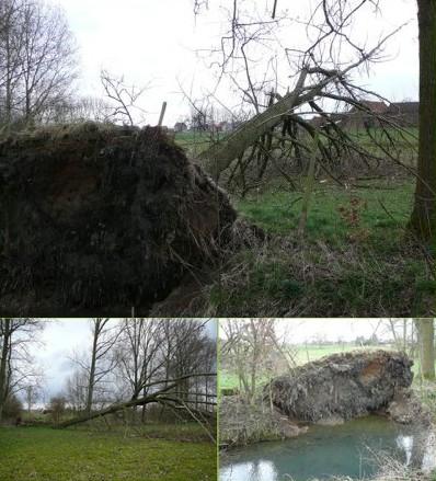 2008-03-31-natuurpunt-omgewaaide-boom.jpg