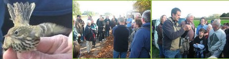 2008-11-28-akkervogel-wandeling