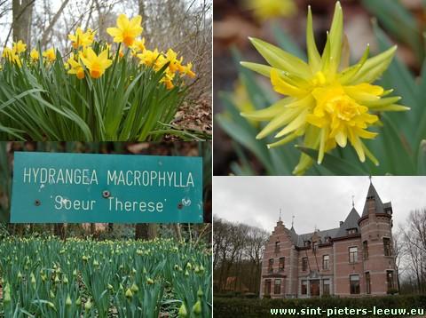 2009-03-29-groenenberg-narcissen