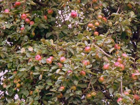 2010-09-24-fruitpluk_01