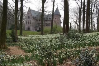 2011-03-27-Groenenberg_voorjaarsbloeiers_01