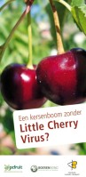 2014-03-13-little-cherry-virus