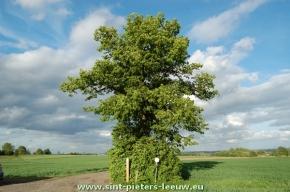 2014-05-07_Witse-boom_Vlezenbeek_Sint-Pieters-Leeuw