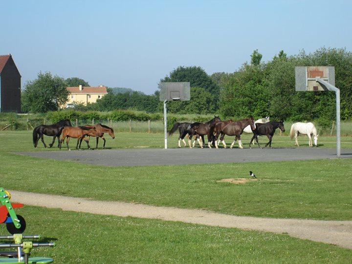2014-05-19-losgelaten-paarden_01