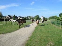 2014-05-19-losgelaten-paarden_02
