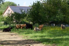 2014-05-22-Gallowayrunderen-in-Volsembroek_02