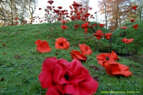 2014-11-21-klaprozen_Coloma_04