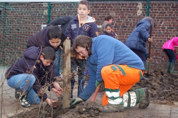 Onder ruime pers aandacht planten de leerlingen van het 4de leerjaar van De Wegwijzer in Ruisbroek de eerste haagjes en fruitbomen.