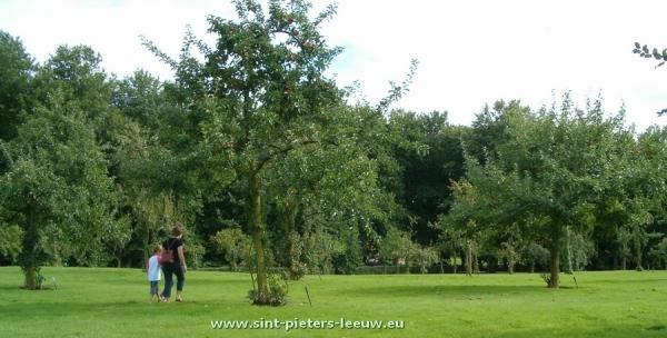 2007-08-14-boomgaard-Colomapark_01