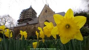 2015-03-22-narcissen-pracht-in-Sint-Pieters-Leeuw_01