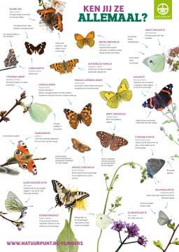 2015-08-02-verschillende-vlinders