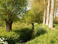 2016-06-03-vogelzangbeek-Vleze