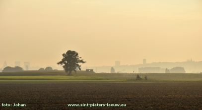 2016-09-15-witse-boom_in-landschap-vlezenbeek