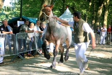 2016-09-25-trekpaardendag_sint-pieters-leeuw_06