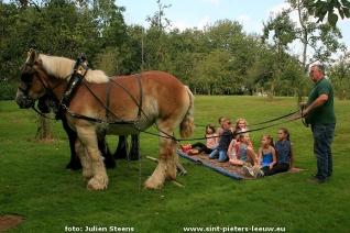 2016-09-25-trekpaardendag_sint-pieters-leeuw_20