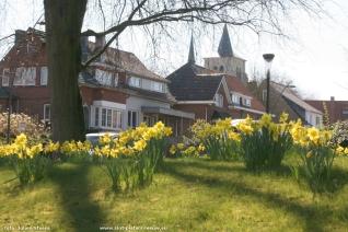 2017-04-01-paasbloemenpracht_in_Sint-Pieters_Leeuw_01