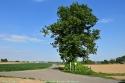 2017-05-09-Witse-boom_Vlezenbeek_Sint-Pieters-Leeuw