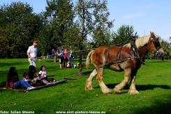 2017-09-24-trekpaarden-middag-en-namiddag (16)