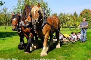 2017-09-24-trekpaarden-middag-en-namiddag (18)