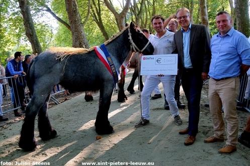 2017-09-24-trekpaarden-middag-en-namiddag (33)