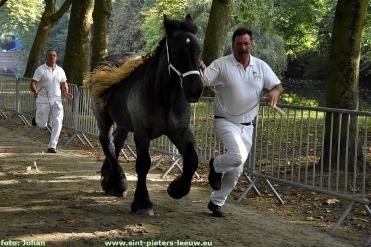 2017-09-24-trekpaarden_Colomapark_Sint-Pieters-Leeuw (15)