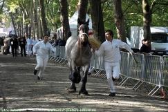 2017-09-24-trekpaarden_Colomapark_Sint-Pieters-Leeuw (18)
