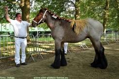 2017-09-24-trekpaarden_Colomapark_Sint-Pieters-Leeuw (22)