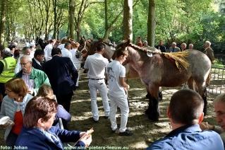 2017-09-24-trekpaarden_Colomapark_Sint-Pieters-Leeuw (30)