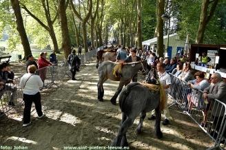 2017-09-24-trekpaarden_Colomapark_Sint-Pieters-Leeuw (35)