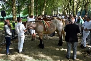 2017-09-24-trekpaarden_Colomapark_Sint-Pieters-Leeuw (45)