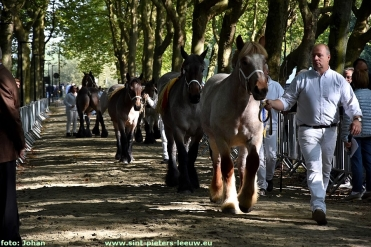2017-09-24-trekpaarden_Colomapark_Sint-Pieters-Leeuw (59)