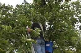 2018-08-30-fruitplukker