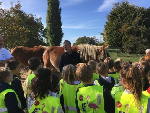 2018-10-11-trekpaard-les_01