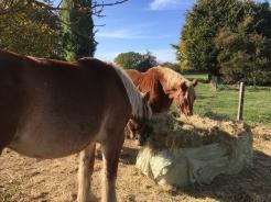 2018-10-11-trekpaard-les_02