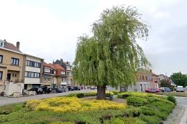 2020-05-06_archieffoto_treurwilg-rotonde-Koning Albertplein